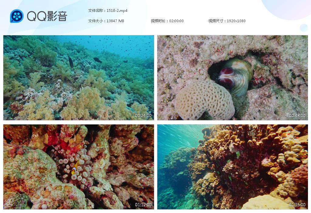 48G7小时大海洋鱼类无版权视频GG1518 视频素材
