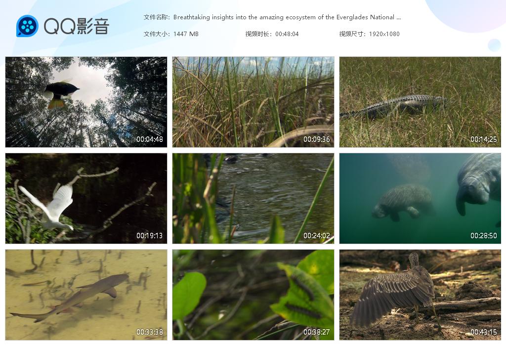 25.1G自然风景和动物视频素材,音乐mv素材视频(5563个)
