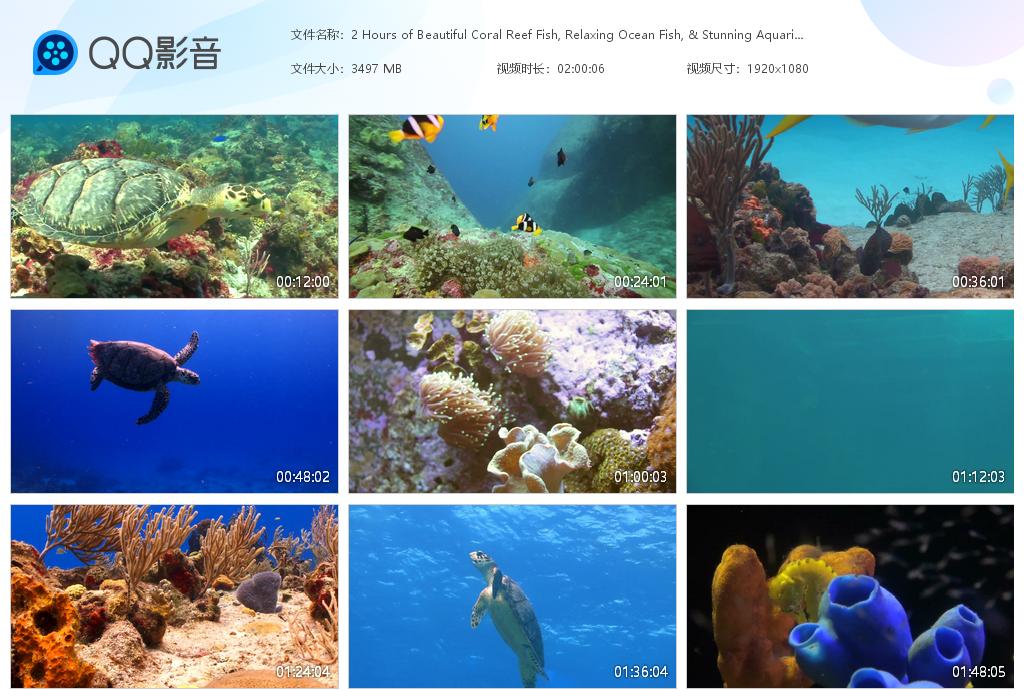 image.png 42.1G海洋鱼类视频素材,音乐mv素材视频 视频素材