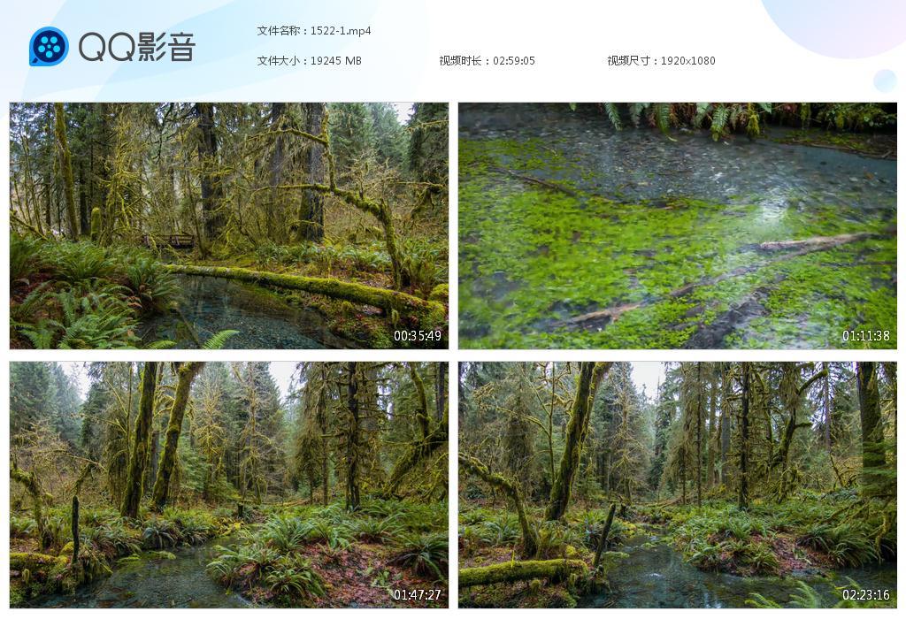 18g3小时森林视频素材GG1524